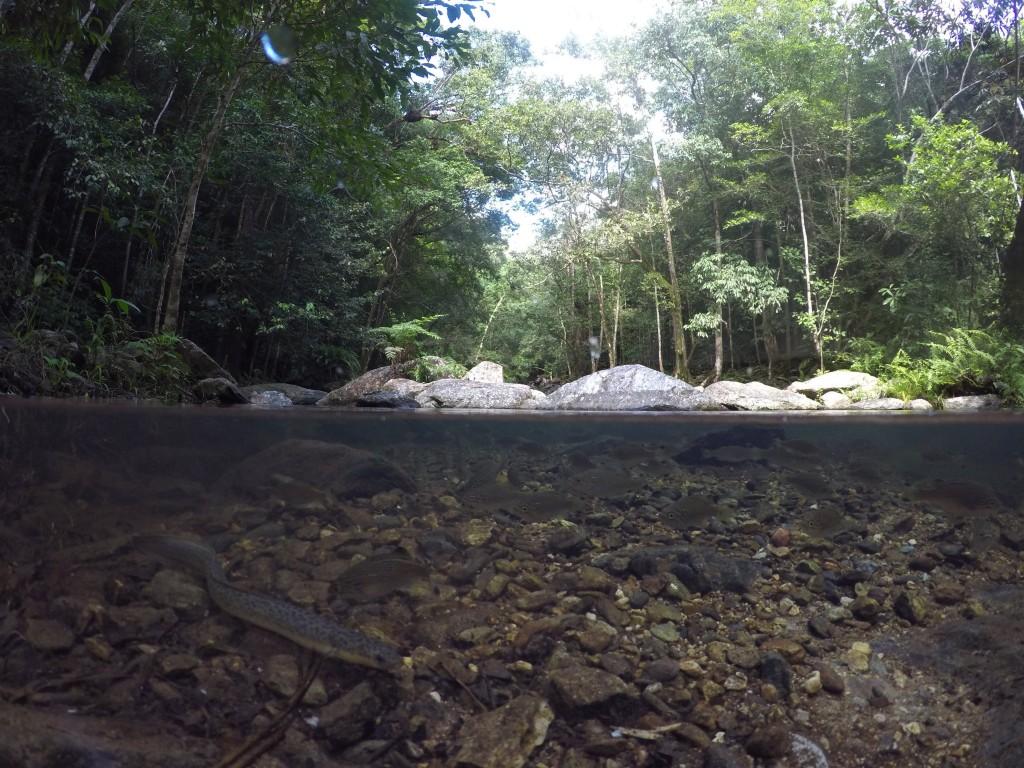 Split Shot Stoney Creek Cairns